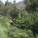 IV RUTA 2008